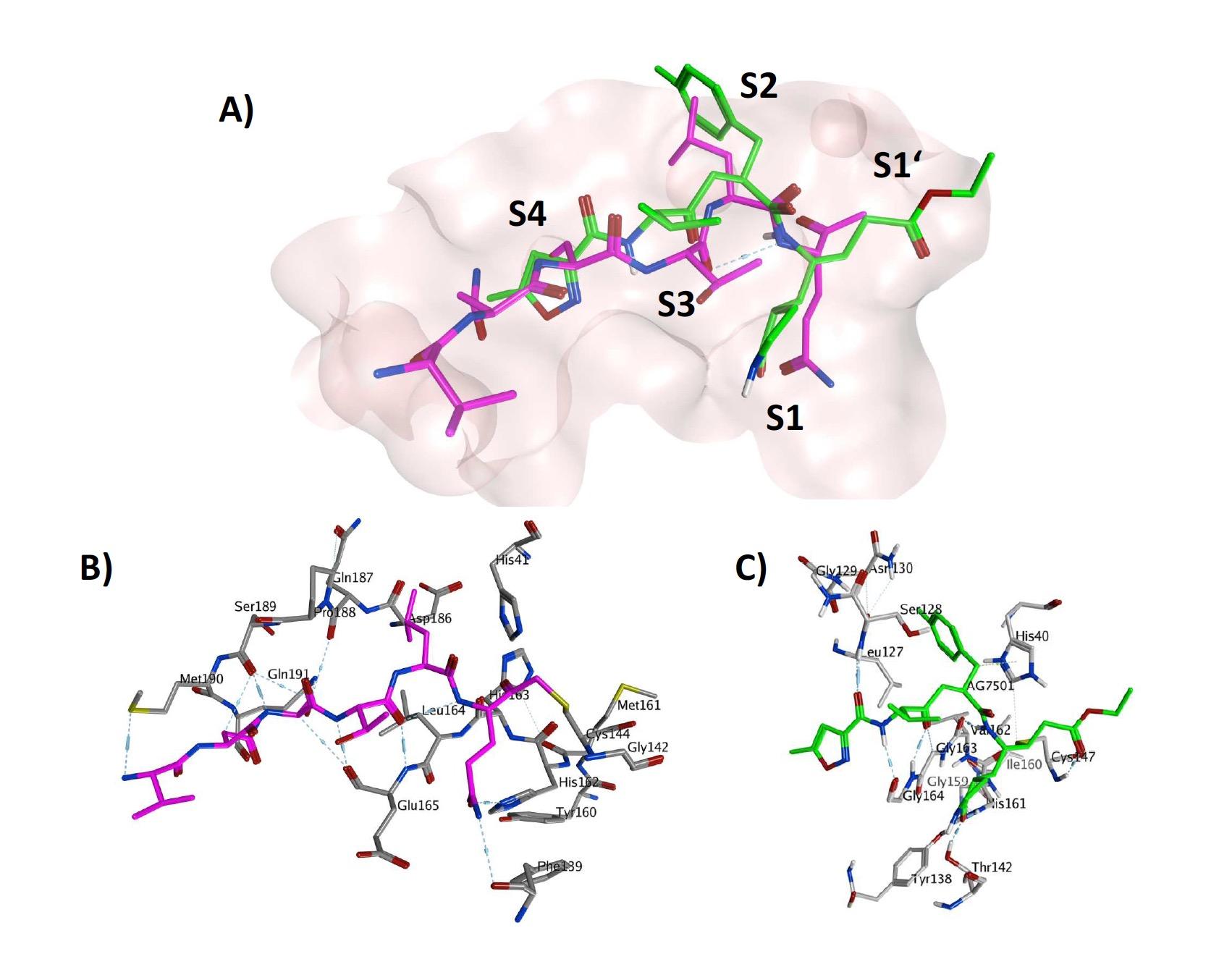 抗病毒藥物與冠狀病毒結合後抑制病毒的複製