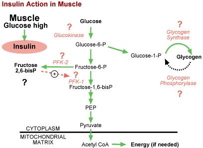 無氧呼吸產生磷化物ATP的效率較差
