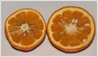 ▲苦橙的果皮就有這種辛樂芬的成分,但是一般人吃橙果,很少連皮一起吃,所以這裡有個替代的東西...