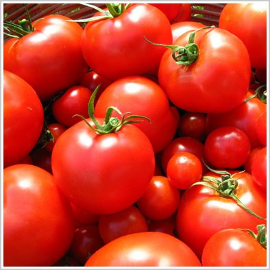 醫學研究證實,多吃番茄可抵抗紫外線所造成的皮膚老化。