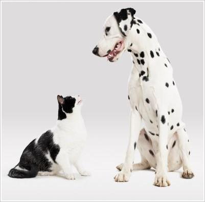 接觸貓狗等多毛寵物如果會加重過敏症狀