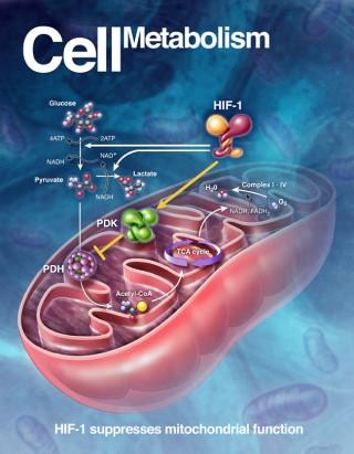 ▲許多醫學文獻證實冷刺激可以促進新陳代謝...