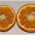 苦橙的果皮就有這種辛樂芬的成分,但是一般人吃橙果,很少連皮一起吃,所以這裡有個替代的東西..