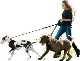 瘦身就該這麼做:遛狗瘦身減肥法