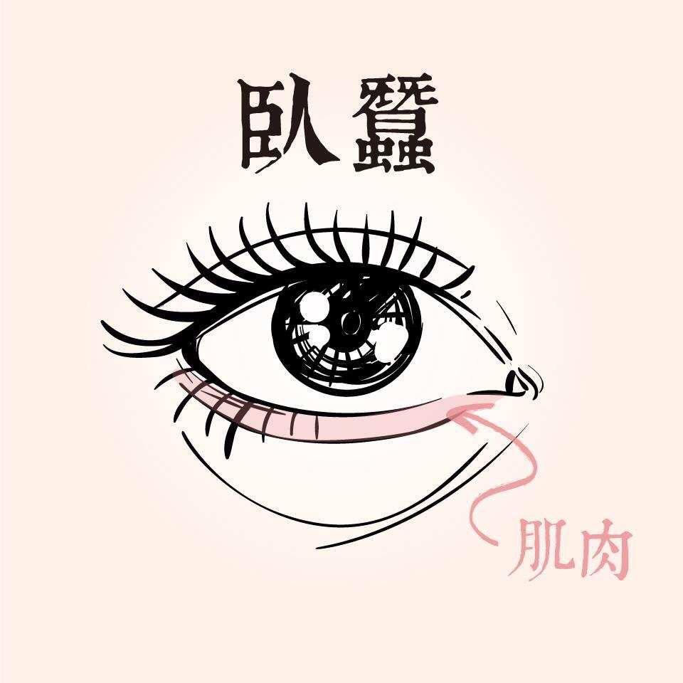 臥蠶是下眼臉邊緣因為肌肉收縮而形成的一條組織