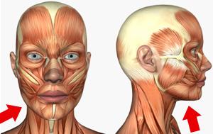 肥肥臉要怎麼瘦臉?要用科學的方法來分析