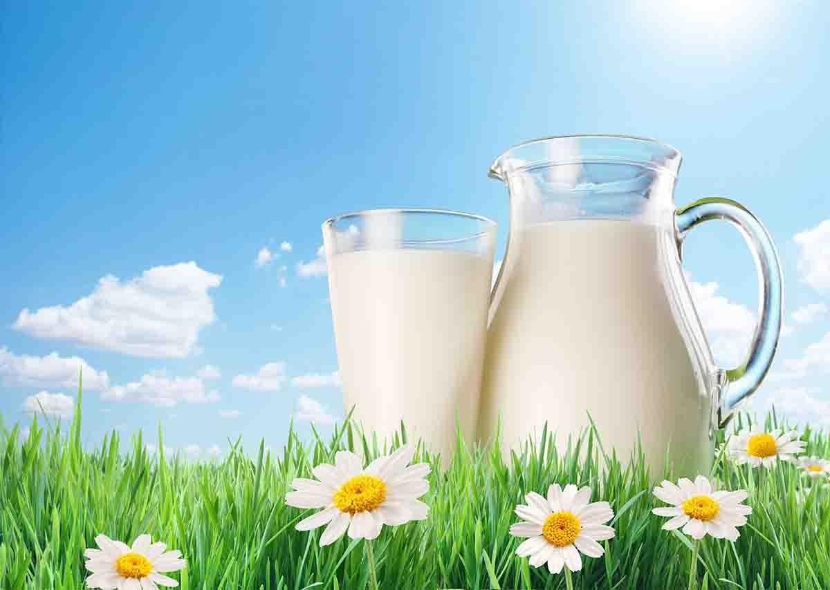 「喝牛奶可降血壓、月瘦4公斤」是真的嗎?