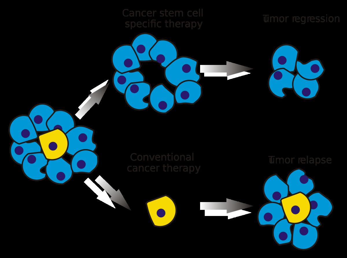 臍帶血幹細胞是一個很有發展潛力的未來醫療項目