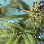 大麻是什麼?對健康有什麼影響?